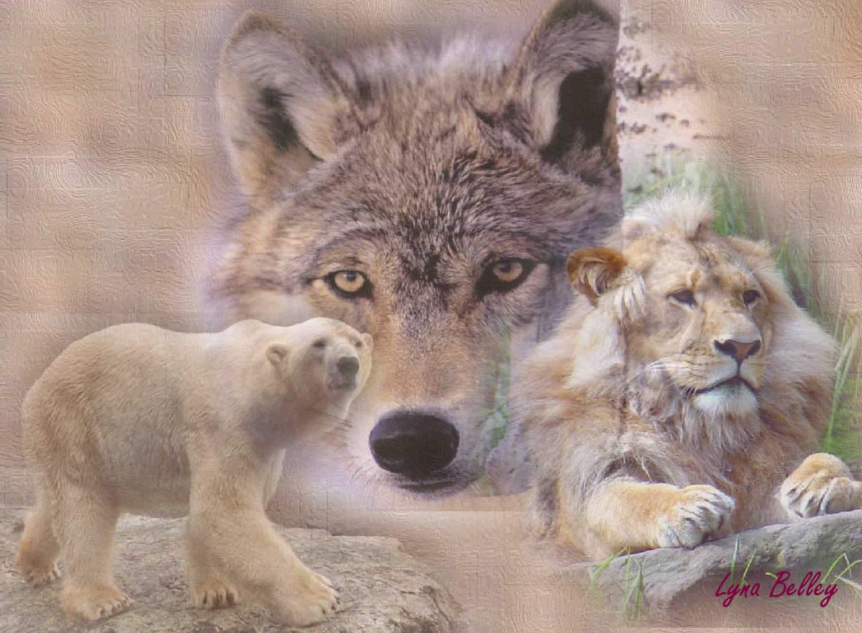 Épinglé par Poupy sur Loups et garou | Loup, Garou
